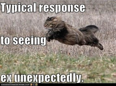 funny-pictures-typical-response-to-seeing-ex-unexpectedly